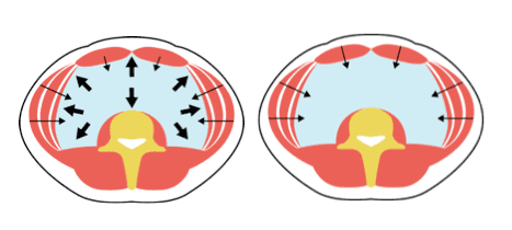 Image showing how core stability is generated from the inside.
