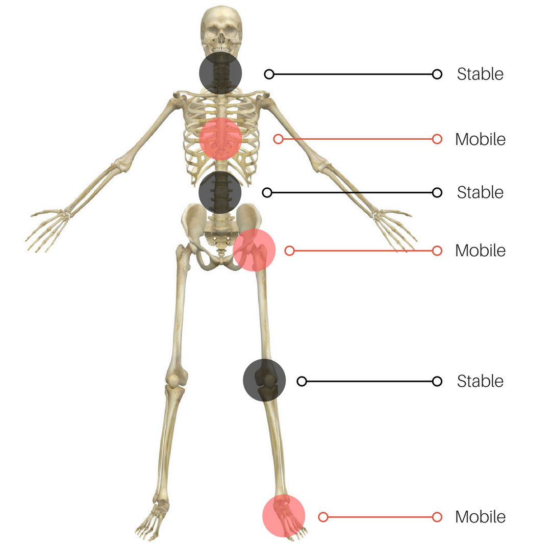 Image highlighting the alternating pattern of mobile and stable joints.