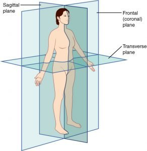 Image showing the different planes of the body.